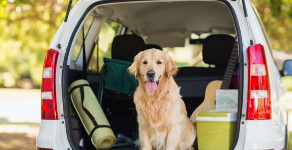 hund auto header image