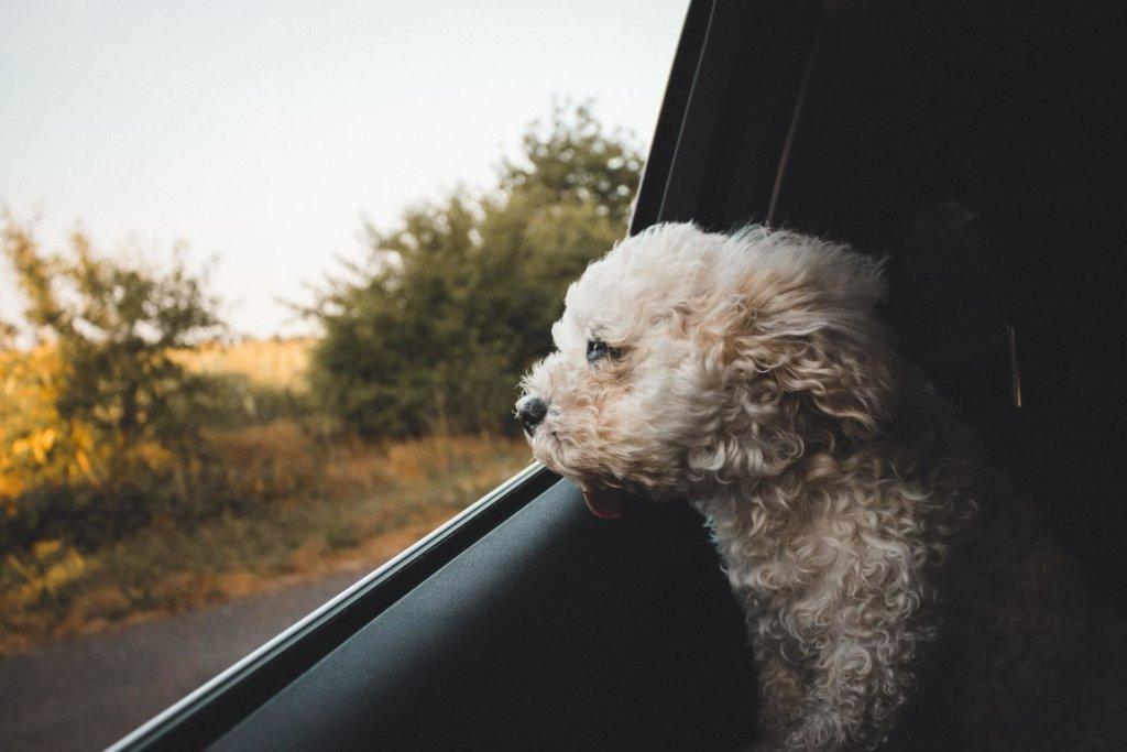 hund fahrtwind