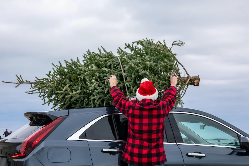 weihnachtsbaum auf autodach