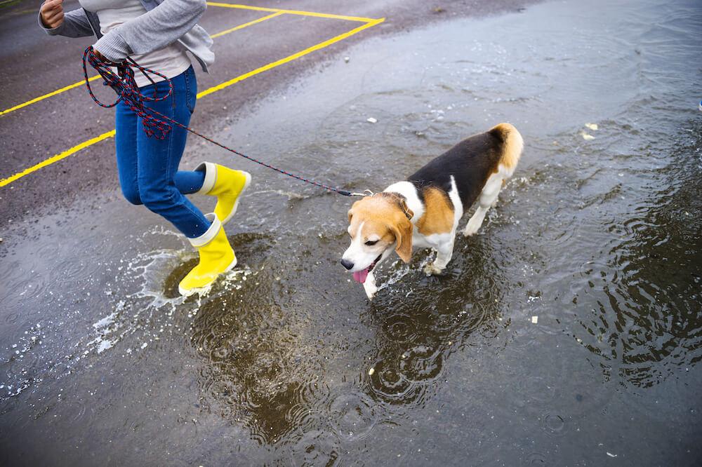 frau mit hund in pfützen bei regen