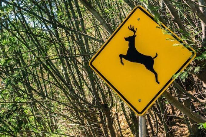 strassenschild zur warnung von wildwechsel